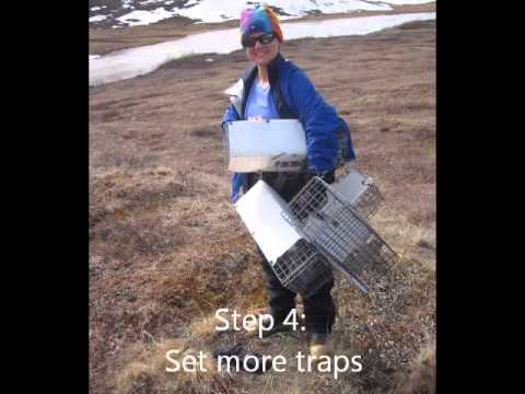 Squirrel trapping 101