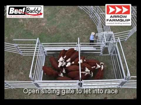 Beef Buddy Low Stress Cattle Handling