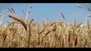 No. 1 haryana song