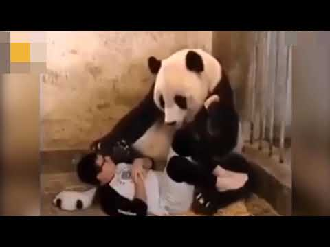 Human Panda