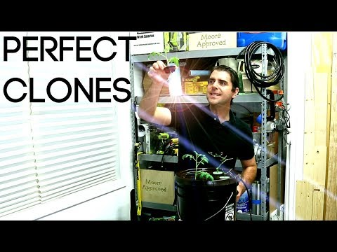 The Power of Aeroponic Cloning | Boost Your Garden | 6 Days To A Viable Clone | Moore Approved