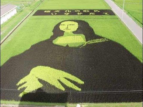 The Rice Field Art Of Japan