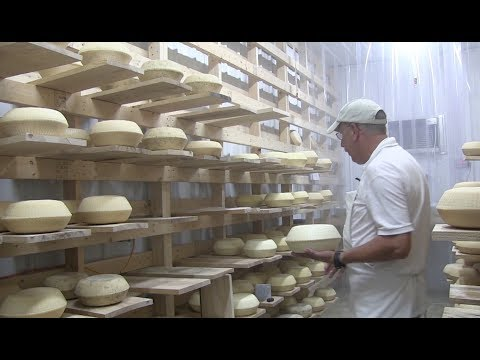 Making Sheep Cheese the Old Fashioned Way