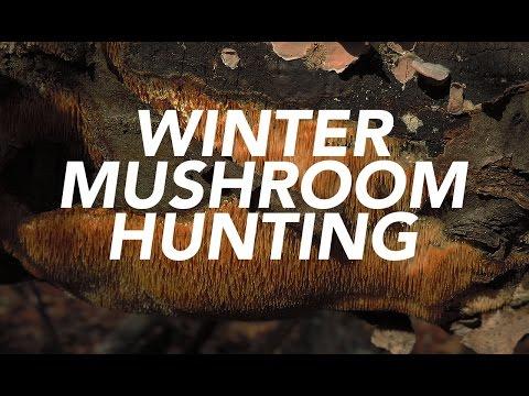 Winter Mushroom Hunting with Adam Haritan