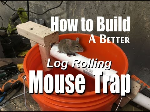 How to make a better log rolling bucket mouse trap easy DIY project