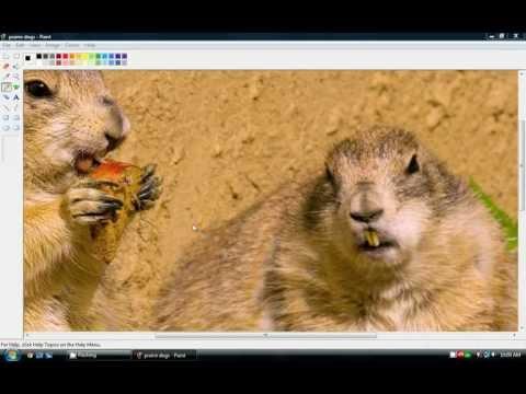 Tutorial: Reduce size image on Windows Vista (Paint)