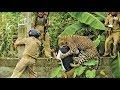 شاهد 4 حيوانات انتقمت من البشر بكل حقد