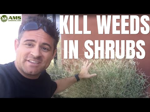 How to Kill Weeds Without Harming Your Shrubs