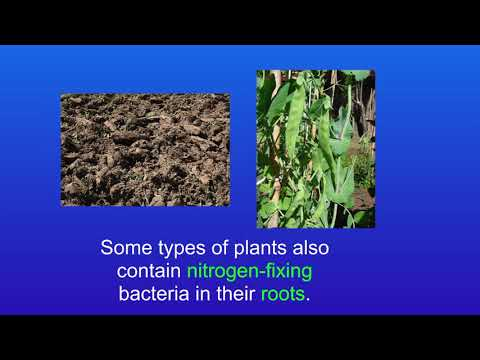 GCSE Science Biology (9-1 Triple) The Nitrogen Cycle