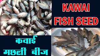 Bangla Krishi Khamar Videos - PakVim net HD Vdieos Portal