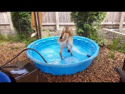 2017.08.13 - Harley Quinn water hose fun