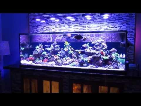 Saltwater fish tank reef aquarium MyReefLiving ( Ben 200 Gallon Super Efficient SPS Dominated )