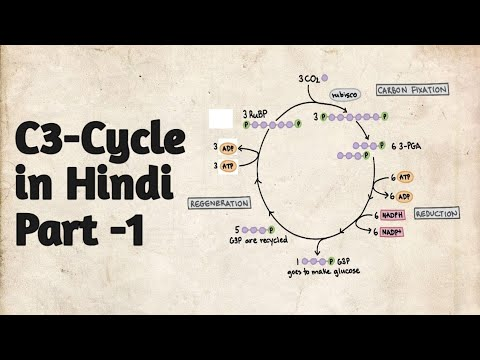 C3 - cycle\Calvin Cycle\ Dark Reaction- Part -I in Hindi