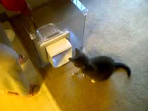 How to Teach Your Cat How to Use MeowSpace - Feeding and Litter Box Solution - MeowSpace