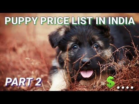 Dog Price List in India| in Hindi | Part-2 | dog price list
