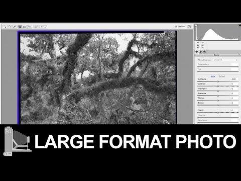 Large Format Film Negative With Ilford's Perceptol Developer