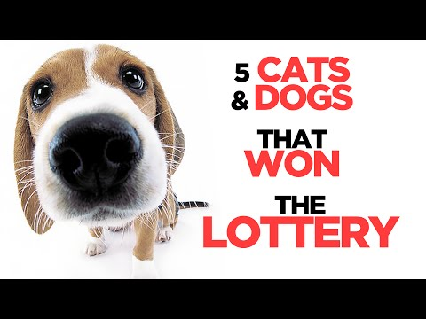 5 Cats and Dogs That Have Won the Lottery