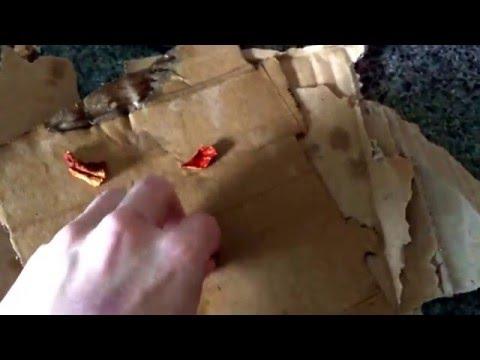 Dried Mushroom Propagation Part I