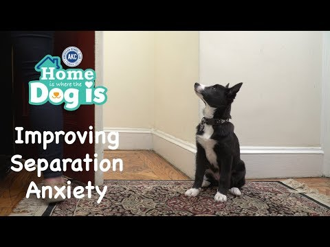 Episode 10 - Improving Separation Anxiety