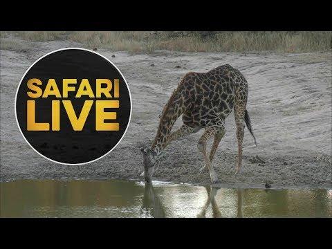 safariLIVE - Sunset Safari - June, 14. 2018