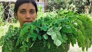 Healthy Food Drumstick Leaves Recipe | Village Style Cooking By Street Village Food