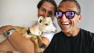 we got a baby goat