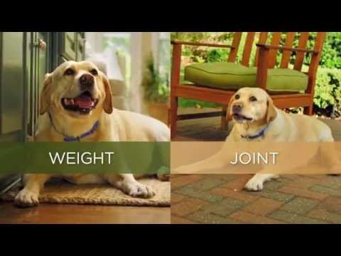 Hill's™ Prescription Diet™ Metabolic + Mobility DOG Ireland