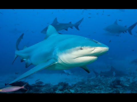 Swarm of sharks close Alabama beaches in US