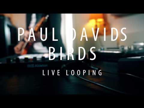 Paul Davids - Live Looping Video - Birds