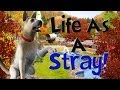 Let's Play The Sims 3 Life As A Stray! Part 1! (A Friend??)
