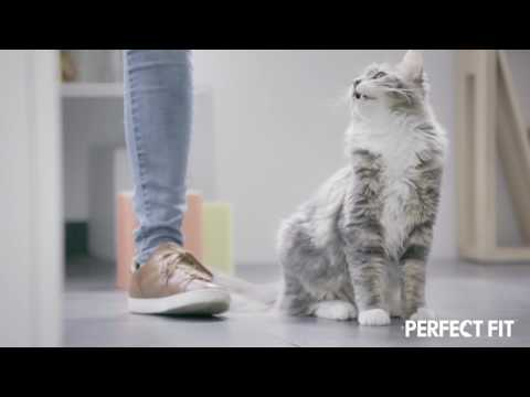 Perfect Fit™ presents HOW TO INSPIRE YOUR CAT TO MOVE AND PLAY INDOORS