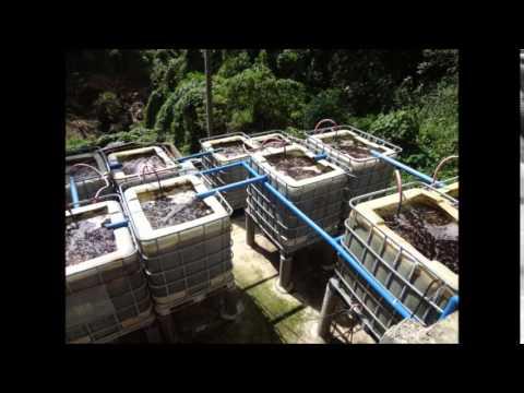 1- TAYSAN BATANGAS.  HINODE METHOD Integrated environmental management system for live stokes.