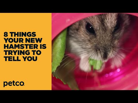 8 Things Your New Hamster is Trying to Tell You: New Pet Tips by Petco