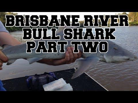 BRISBANE RIVER BULL SHARK! (PART TWO)