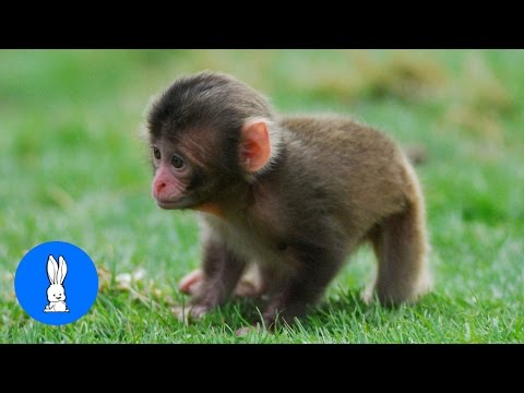 Monkey See Monkey Do! (Baby Edition) - Cutest Compilation
