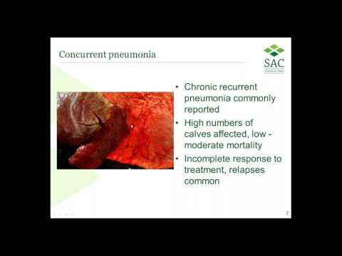Webinar: Mycoplasma bovis
