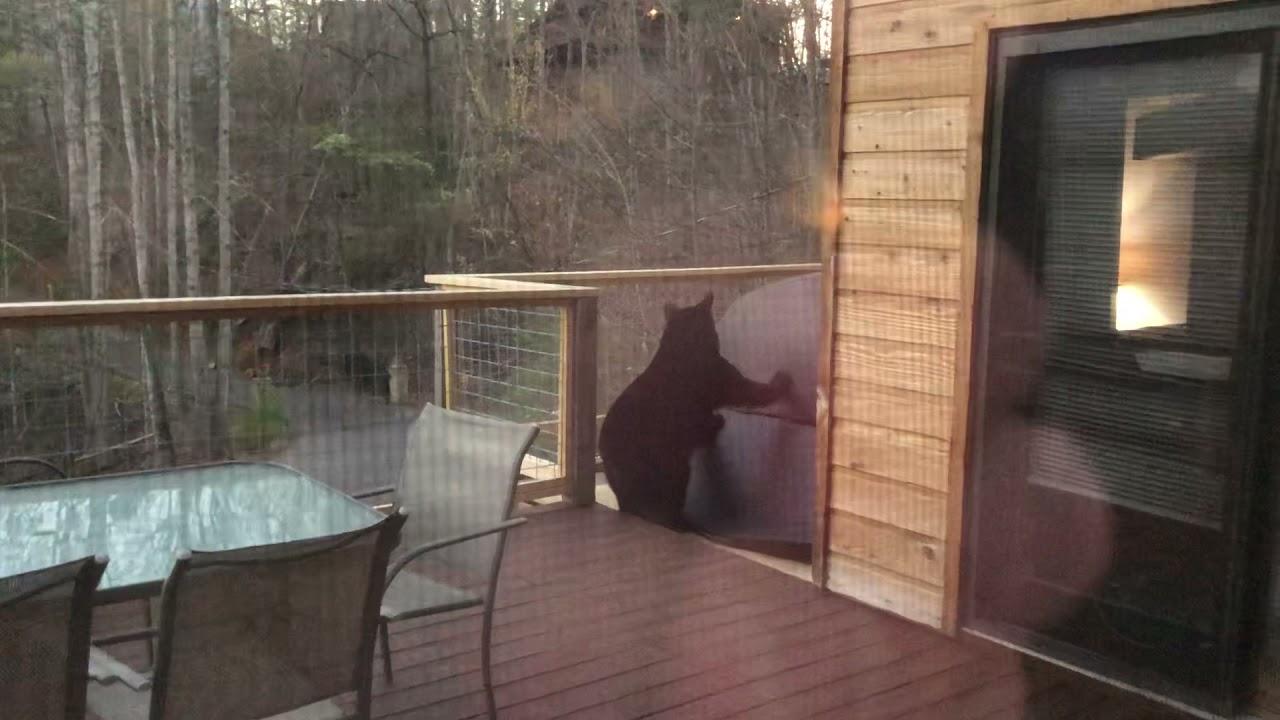 Black bear in our hot tub in Gatlinburg, TN