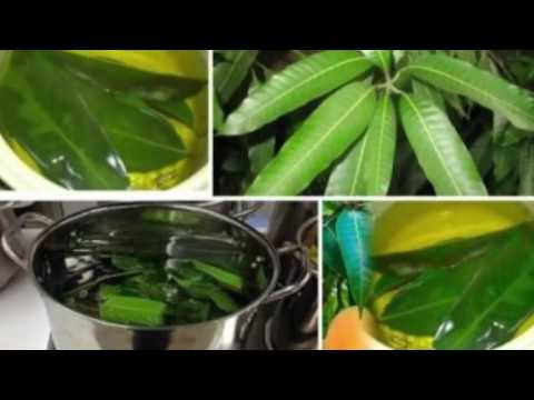 YOU HAVE DIABETES SYMPTOMS JUST BOIL THESE LEAVES AND SOLVE DIABETES WITHOUT MEDICATIONS!