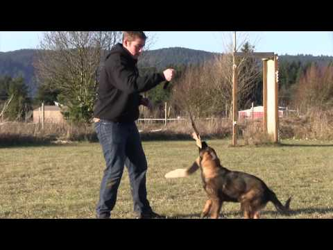 How To Select A German Shepherd Puppy - why the grip is important