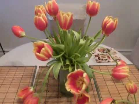Droopy tulips: how to make them upright.