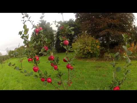 Orchard Update October 2016