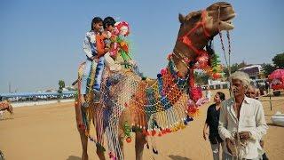 Joyful Camel Ride By Small Kids At Pushkar Fair Hd Video,rajasthan,india.indian Camels.ऊंट Mela