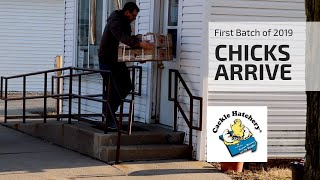 Download Baby Chicks Arrive | First Batch of 2019 Video