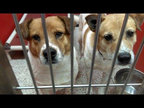 6 Pima Animal Care Center Adoptable Doggies on 2-28-18