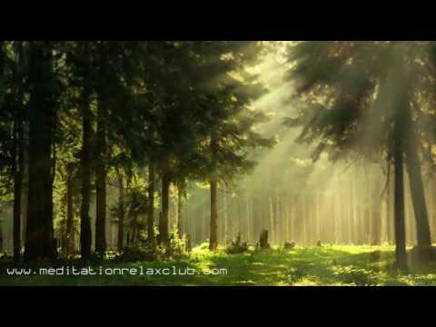 Noise Cancelling: Sound Masking, White Noise, Nature Sounds & Background Ambient Music