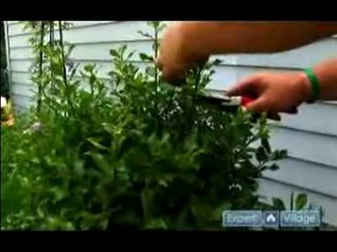 How to Prune & Care for Trees & Shrubs : How to Prune Shrub Bushes