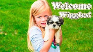 SURPRISE PUPPY Welcome to the Family Worlds Smallest Puppy Surprise TheEngineering Family Video