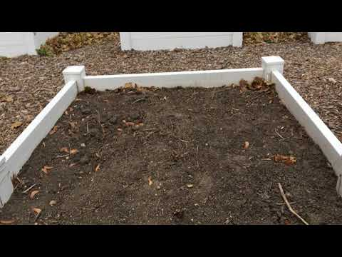 Week 28: Life Finds a Way- Container Gardening Season 8