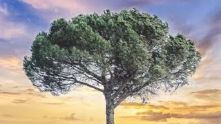 Healing Prayer Music | Holy Spirit Fill This Place | Anointed Hymns | Instrumental