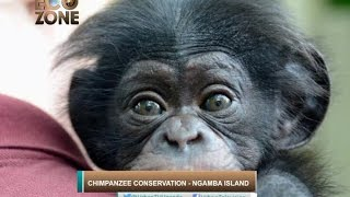 ECOZONE: Chimpanzee Conservation Part D - Ngamba Island!